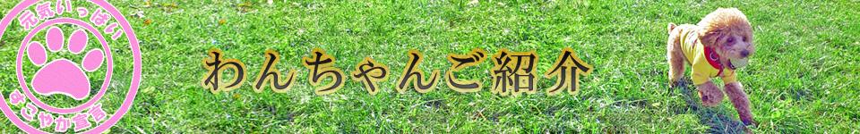 ドッグハウス Mr.BEAN 磯部ブリーダーのわんちゃんご紹介ページ